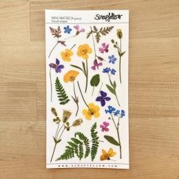 Préselt virágok | matrica